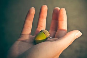 Acorn on a woman hand