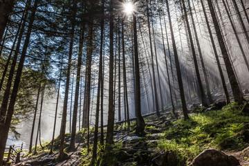 Nebelwald in der Nähe der Reinfälle im Reintal