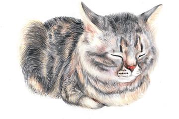 Домашний кот Мусик. Отдых после еды.