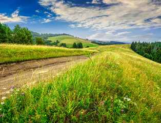 country road through a meadow