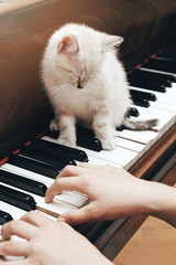 Wall Mural - chaton beige européen sur piano avec fillette jouant