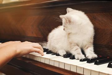 Fotomurales - chaton beige européen sur piano avec fillette jouant