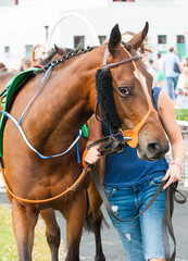 Walking a Race horse in the the parade ring before the race