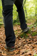 Walking in a beech forest