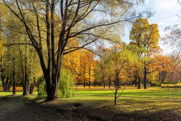 sunny landscape in autumn park