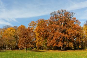 autumn park with deciduous trees
