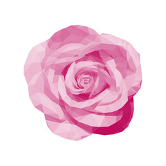 polygonal pink rose top view completely open