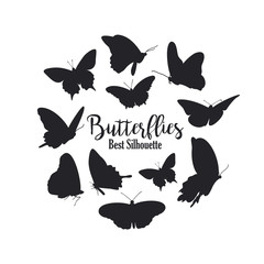Butterflies silhouette on the white background