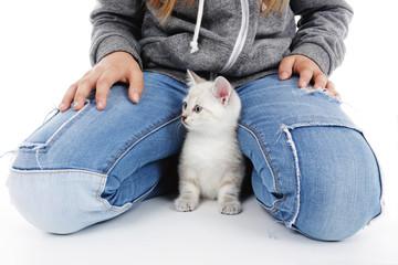 chaton européen se cachant dans le jeans d'une fillette