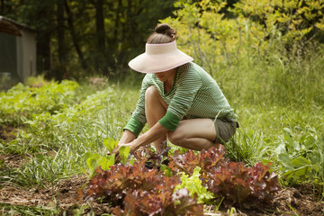 Woman planting lettuce in garden