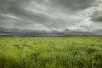Large field of grass before storm