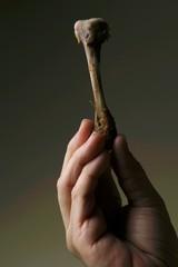 Hand holding a chicken leg bone