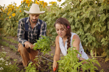 Young couple working in vegetable garden
