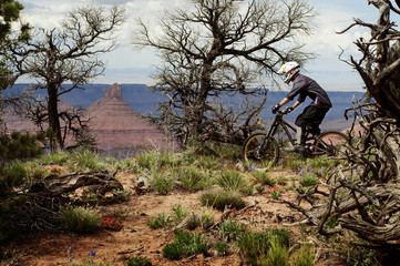 Mountain biker riding in forest