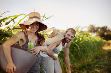 Young couple picking up vegetables in field