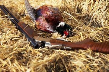 Dead bird on hay with rifle