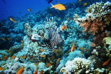 Exotic fish on coral reef