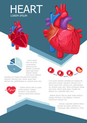 Human heart infographic