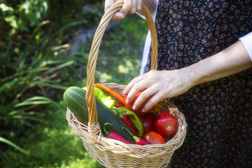 Cropped image of woman holding vegetables in basket at yard