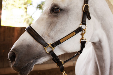 Close-up of horse with bridle standing in stable