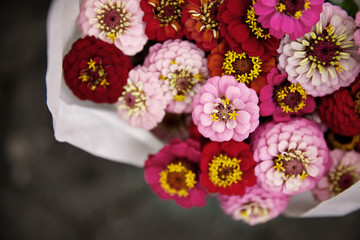 High angle view of pink zinnias in bouquet at flower shop
