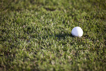 White polo ball on grass