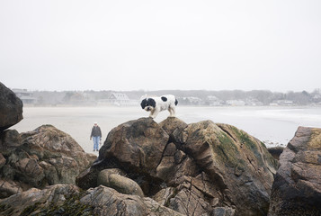 USA, Massachusetts, Magnolia, Portrait of dog standing on rocks