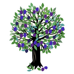 Illustration Plum tree
