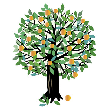 Peach or Orange tree