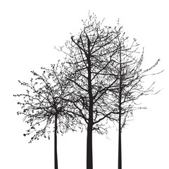Shape of Tree without Leaves. Vector Illustration.