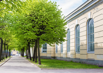 Alley of green trees in the  street of Saint Petersburg.  Russia