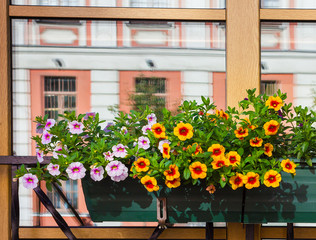 Window Box Flower Arrangement. St Petersburg. Russia