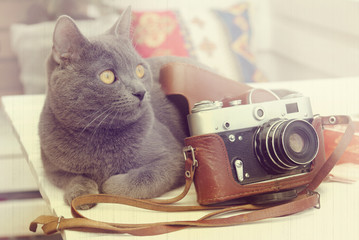 photographer with a mustache/ retro background with a cat lying near the old camera