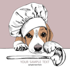 The poster with the image of dog Beagle in the hat of chef and with the ladle. Vector illustration.