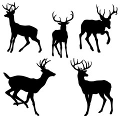 adult male deer silhouette black vector illustration set