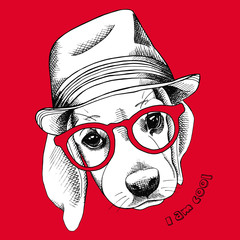 Image of beagle dog in a hat and glasses. Vector illustration.