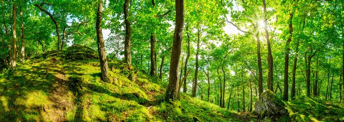 Fototapete - Wald Panorama bei strahlendem Sonnenschein