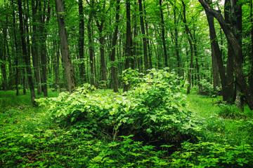 Deep moss forest