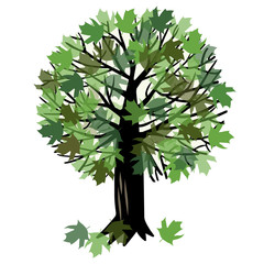 Vector illustration with a maple tree