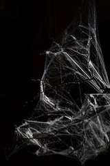 Abstract Spiderweb on black