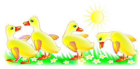 Illustration of four little ducklings, vector cartoon image.