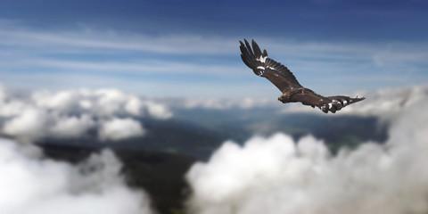Golden eagle sbove the clouds Fototapete