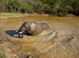 Badender Elefant