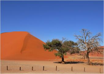 Düne 42 im Sossusvlei National Park