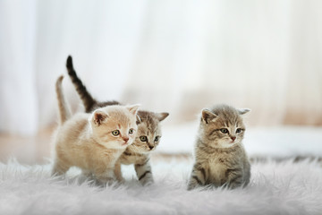 Small cute kittens on carpet