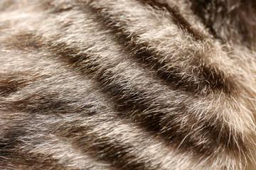 Grey cat's fur, close up