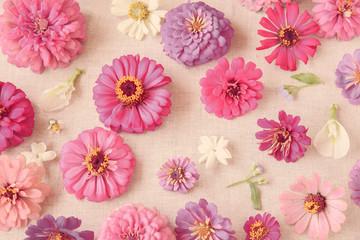 Pink flowers summer background, selective focus, vintage toning