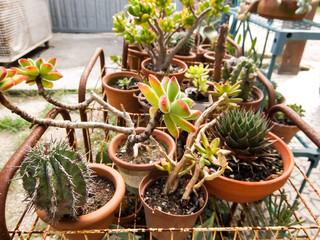 Cactus Texture Background