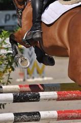 Im Detail, das Pferd im Sprung über die Hürde, von seitlich hinten