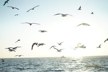 푸른바다 갈매기 Fotobehang